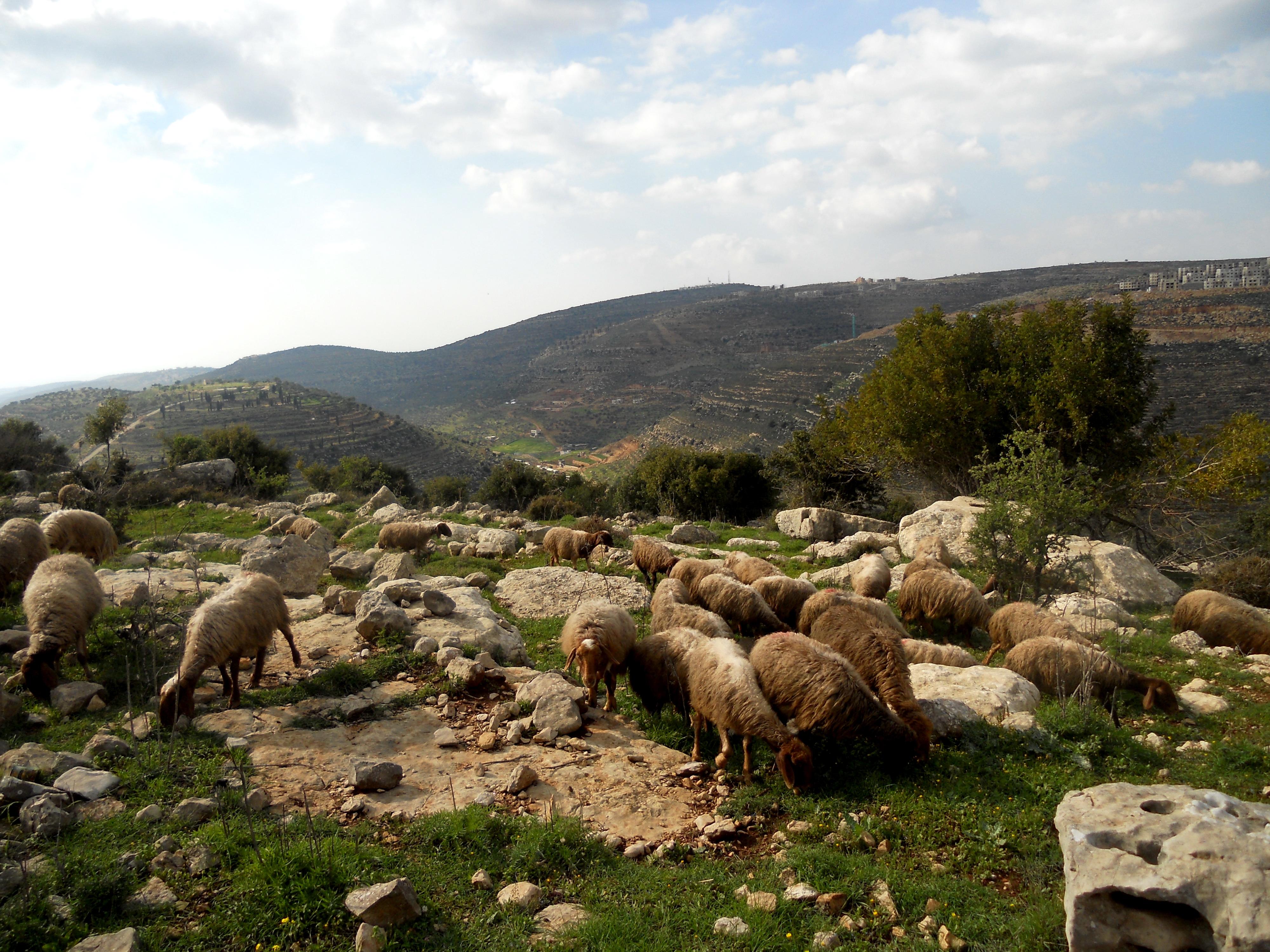 قرار دولي بسيادة الشعب الفلسطيني على موارده الطبيعية