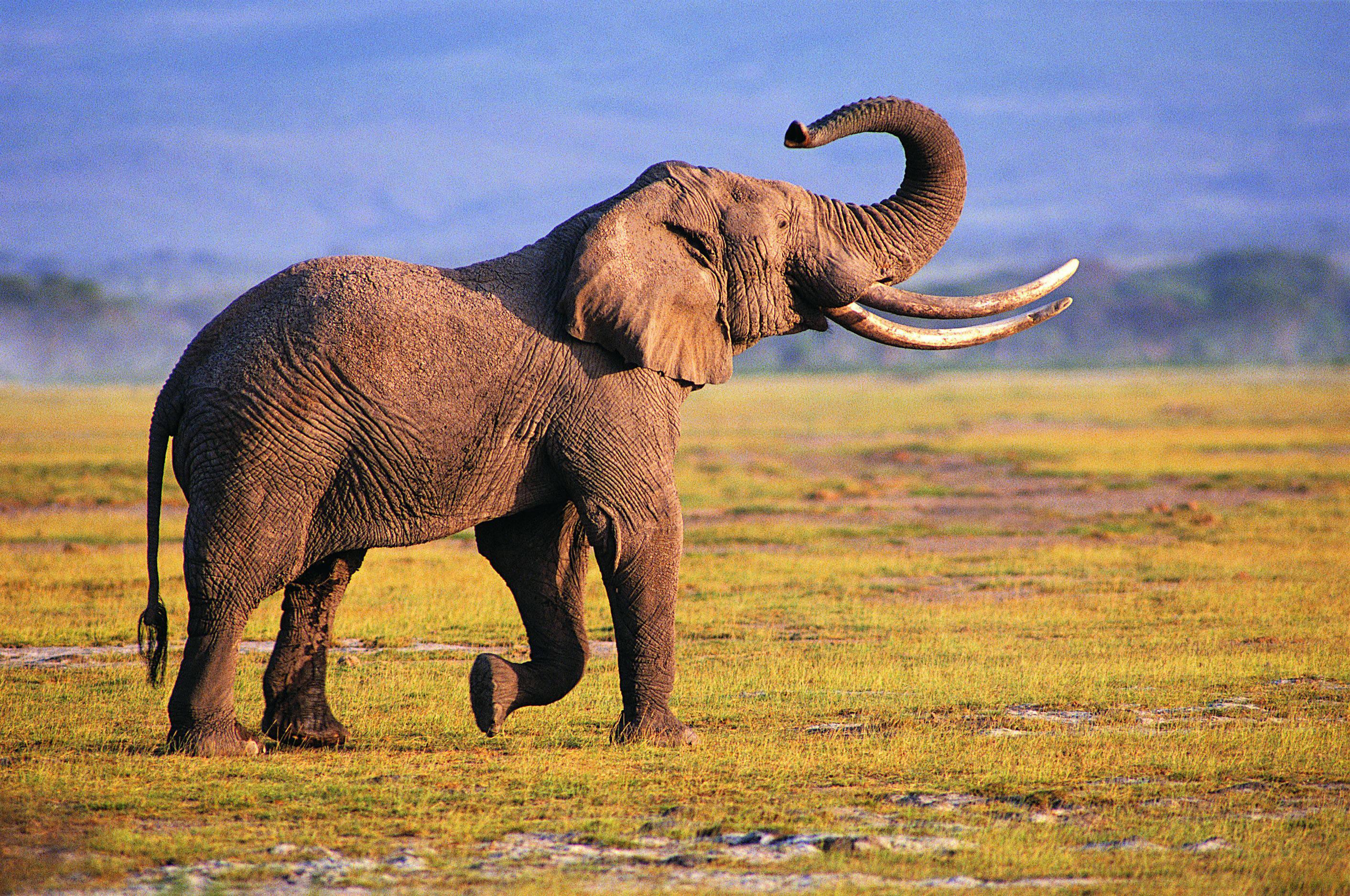 فيل يصعق نفسه بالكهرباء