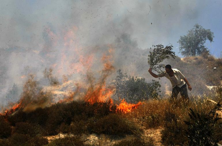 مستوطنون يحرقون أكثر من 250 شجرة زيتون غرب بيت لحم