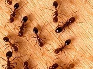 كيف يجد النمل طريقه إلى عشه مشيا للخلف؟