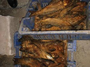 700 كيلو .. ضبط أسماك ولحوم غير صالحة للاستخدام الآدمي في نابلس