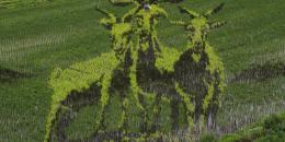 صور خلّابة لمزارع الأرز في الصين