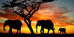 مقتل أكثر من ربع الأفيال في العالم خلال العقد الماضي