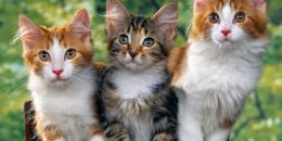 90% من الألمان يعتبرون حيواناتهم الأليفة من أفراد الأسرة