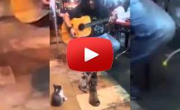 """Embedded thumbnail for موسيقي يعزف لجمهور من """"القطط"""""""