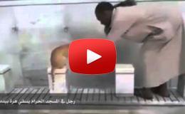 Embedded thumbnail for  رجل يسقي قطة بيديه في المسجد الحرام
