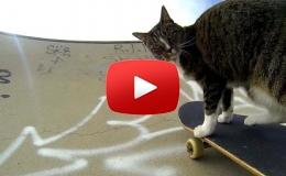 Embedded thumbnail for قطة تتمتع بالقدرة على التزحلق على اللوح الخاص بذلك