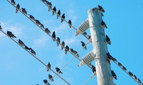 لمَ لا تُصعق أو تتكهرب الطيور التي تقف على أسلاك الكهرباء ؟