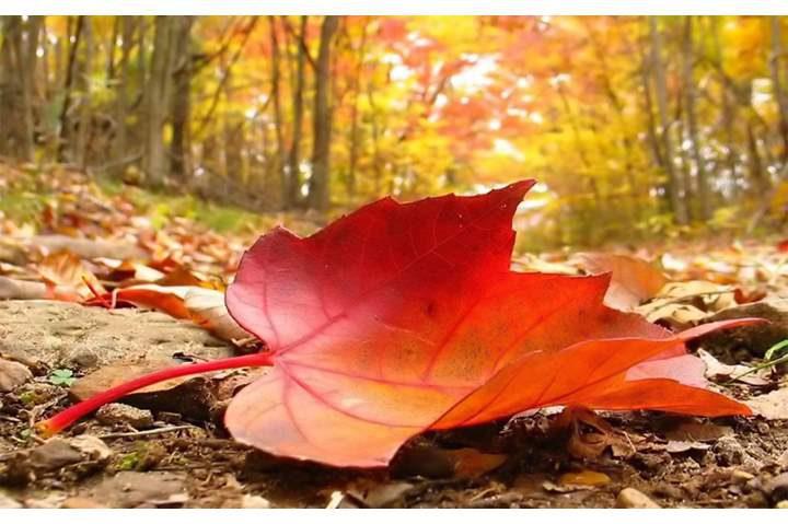 الخريف يبدأ