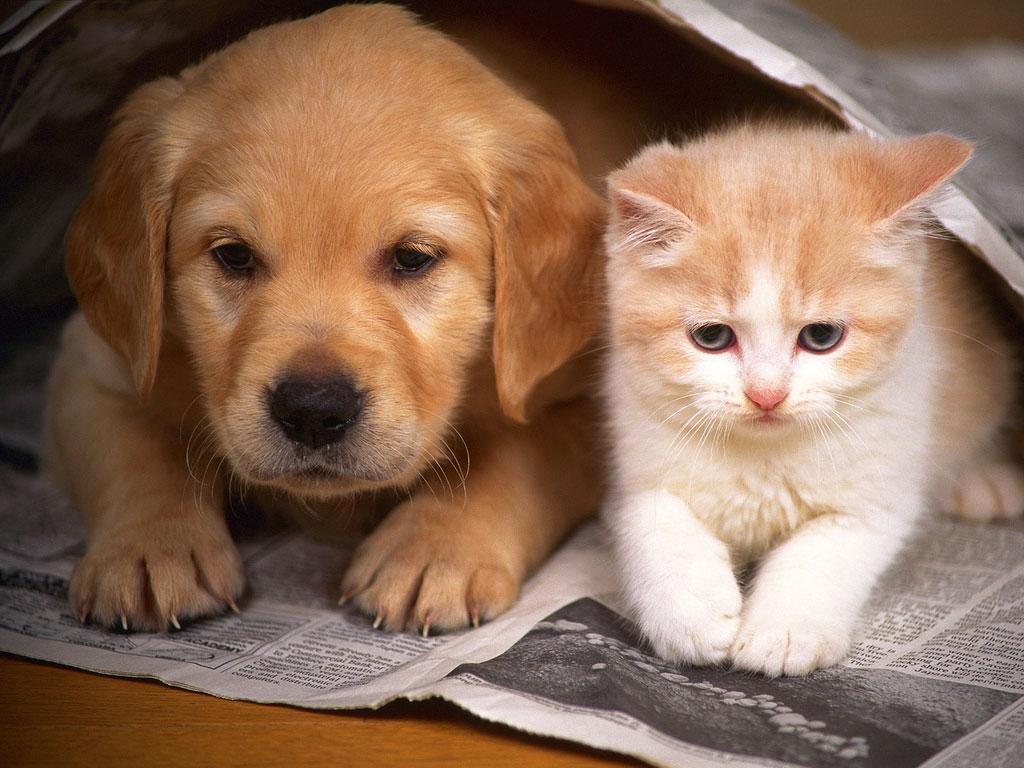مالكو الكلاب أكثر سعادة من مالكي القطط