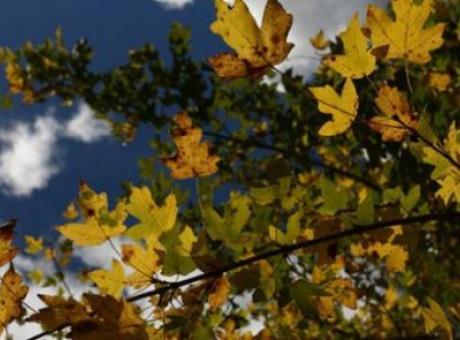 حالة الطقس: أجواء خريفية وفرصة لزخات محلية