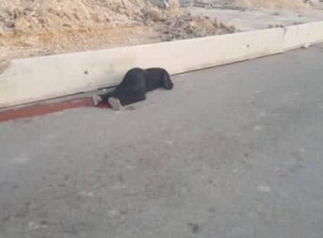 إعلام الاحتلال : استشهاد سيدة 50 عاماً متأثرة بجراحها التي اصيبت بها قرب حاجز قلنديا