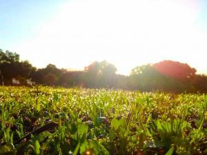 حالة الطقس: نهاية أسبوع مشمسة وغير حارة