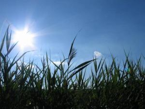حالة الطقس: انخفاض طفيف في الحرارة وارتفاع في الرطوبة