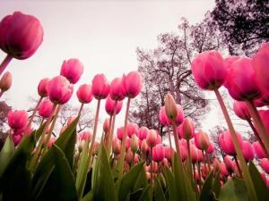مادة كيميائية مخفية في الزهور تقتل الخلايا السرطانية