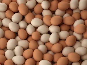 ما الفرق بين البيض الأبيض والبيض البني؟