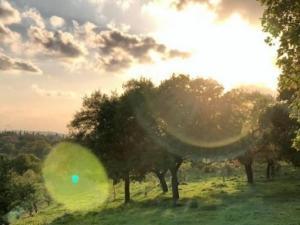 الطقس: جو مشمس ودافئ نهارا وبارد نسبيا ليلا