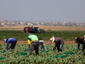 صحيفة: هكذا يتم استعباد العمال الأجانب في إسرائيل