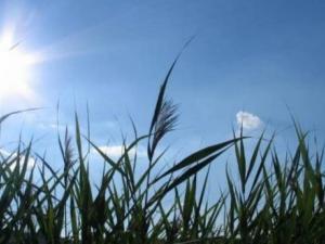 حالة الطقس: مشمس حتى الثلاثاء