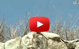 Embedded thumbnail for برنامج الروزنا...تعرف على بلدة قباطية